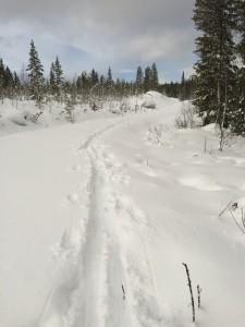 Metsäautotien pohjaa oli hyvä hiihdellä